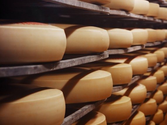 Dibal solutions for the cheese industry