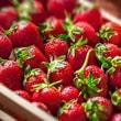 Industria hortofrutícola